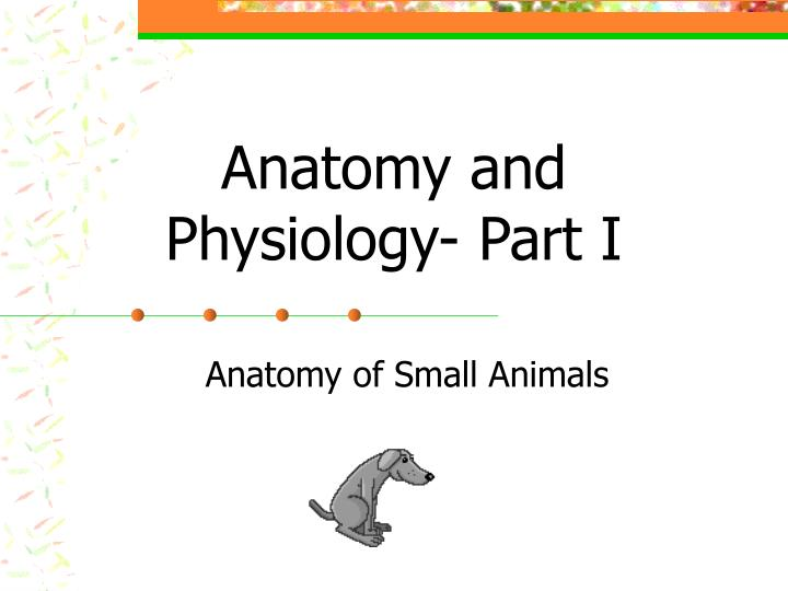 anatomy and physiology part i n.