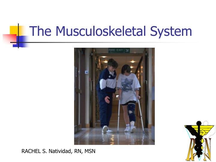 the musculoskeletal system n.