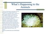 what s happening to the animals11