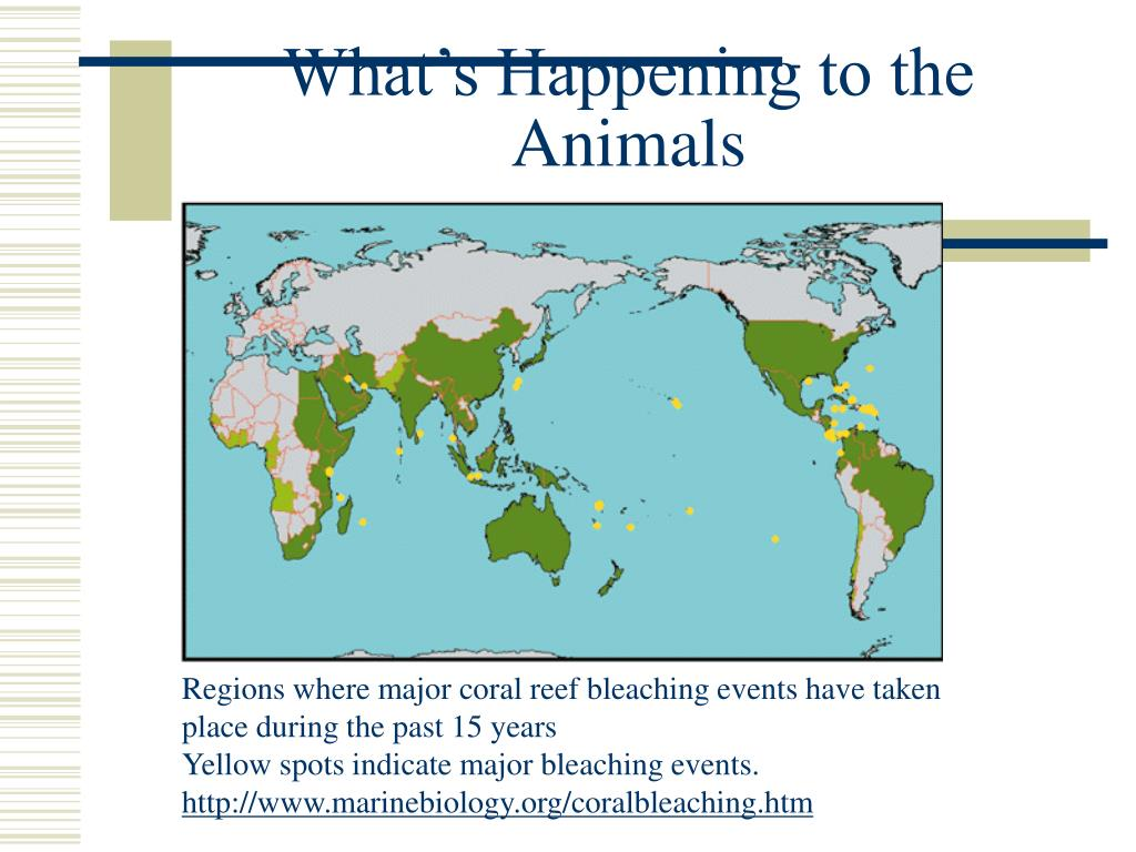 What's Happening to the Animals