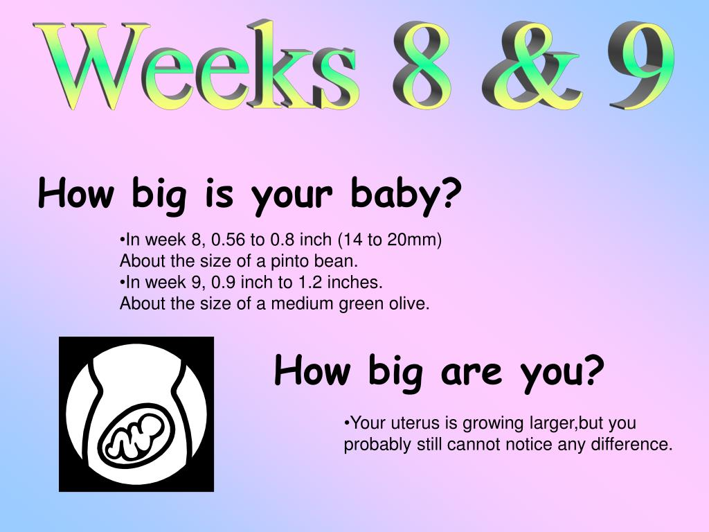PPT - 40 Weeks and Counting PowerPoint Presentation - ID:1485577