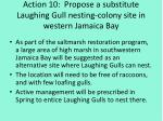 action 10 propose a substitute laughing gull nesting colony site in western jamaica bay