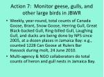action 7 monitor geese gulls and other large birds in jbwr