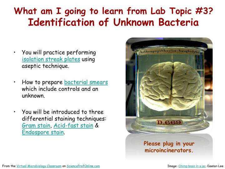 What am i going to learn from lab topic 3 identification of unknown bacteria