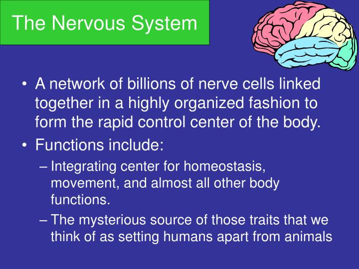 evaluation of nervous systems involvement to homeostatic function The autonomic nervous system controls all involuntary actions within the human nervous system core body functions regulated by the autonomic system include breathing, heartbeat, blood pressure, body temperature, perspiration, and bowel, bladder and sexual function.