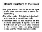 internal structure of the brain
