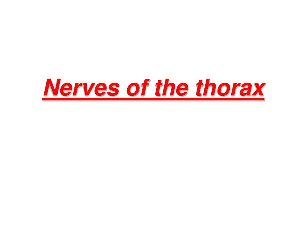PPT - Nerves of the thorax PowerPoint Presentation - ID:1487567