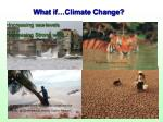 what if climate change