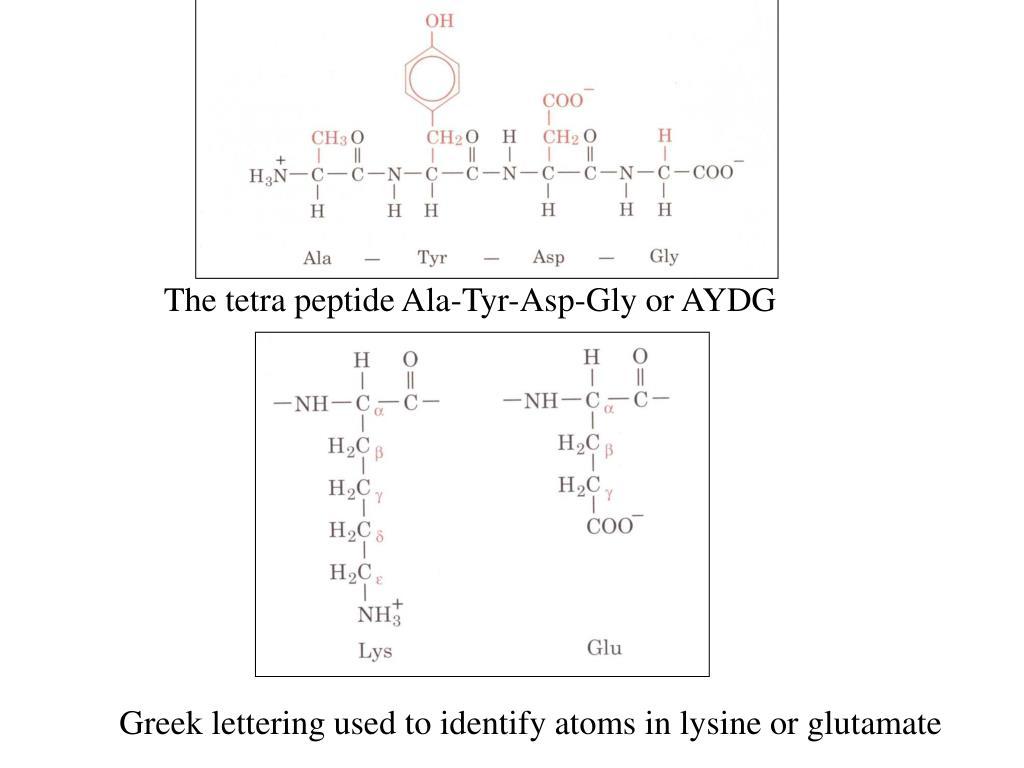 The tetra peptide Ala-Tyr-Asp-Gly or AYDG