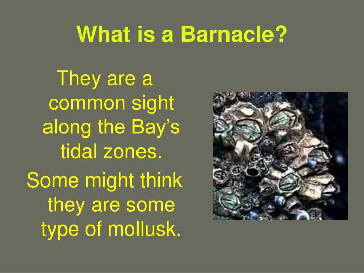 What is a barnacle3