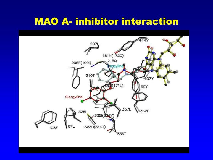 Mao a inhibitor interaction