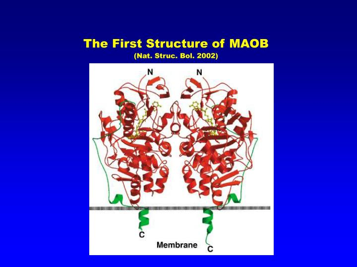 The first structure of maob nat struc bol 2002