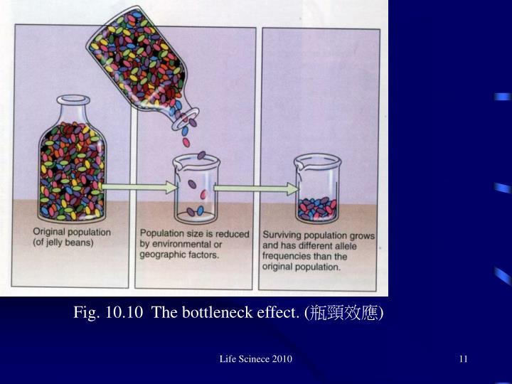 Fig. 10.10  The bottleneck effect. (