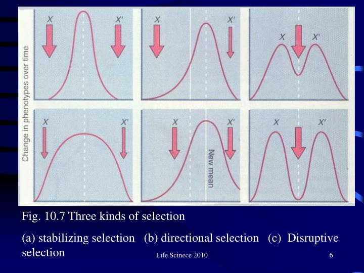 Fig. 10.7 Three kinds of selection
