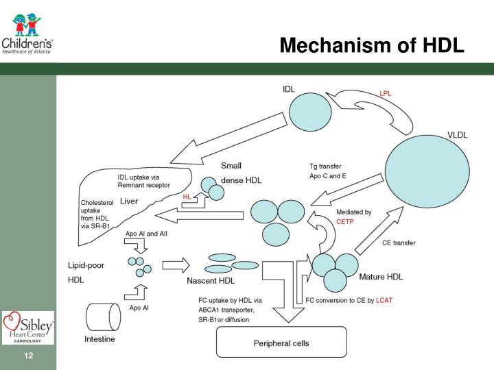 Mechanism of HDL