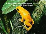 golden toads have disappeared from the monteverde cloud forest