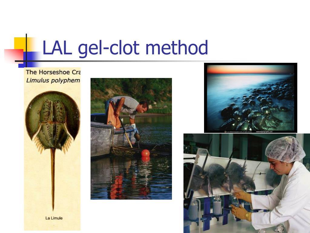LAL gel-clot method
