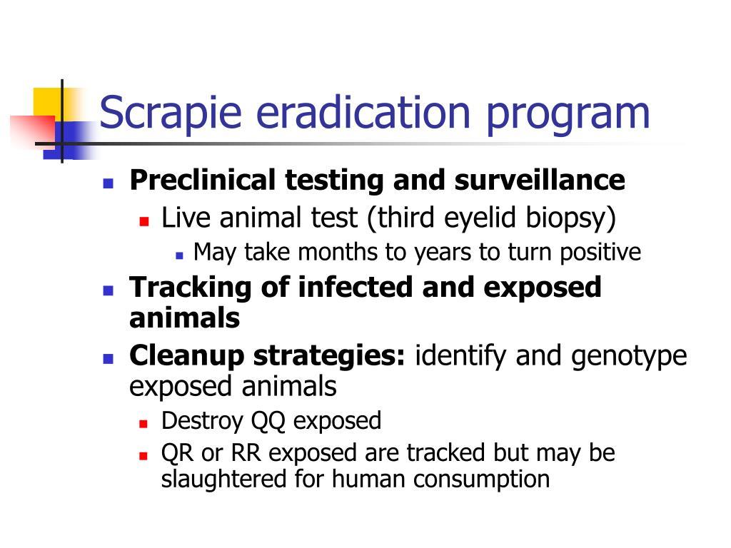 Scrapie eradication program