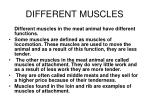 different muscles