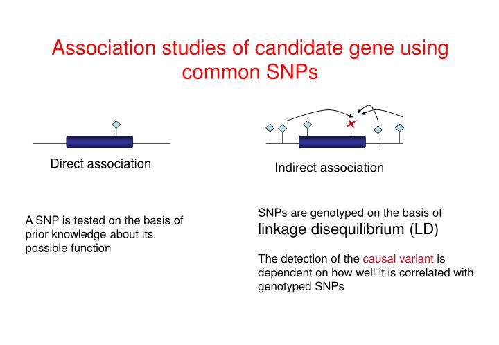 Association studies of candidate gene using common SNPs