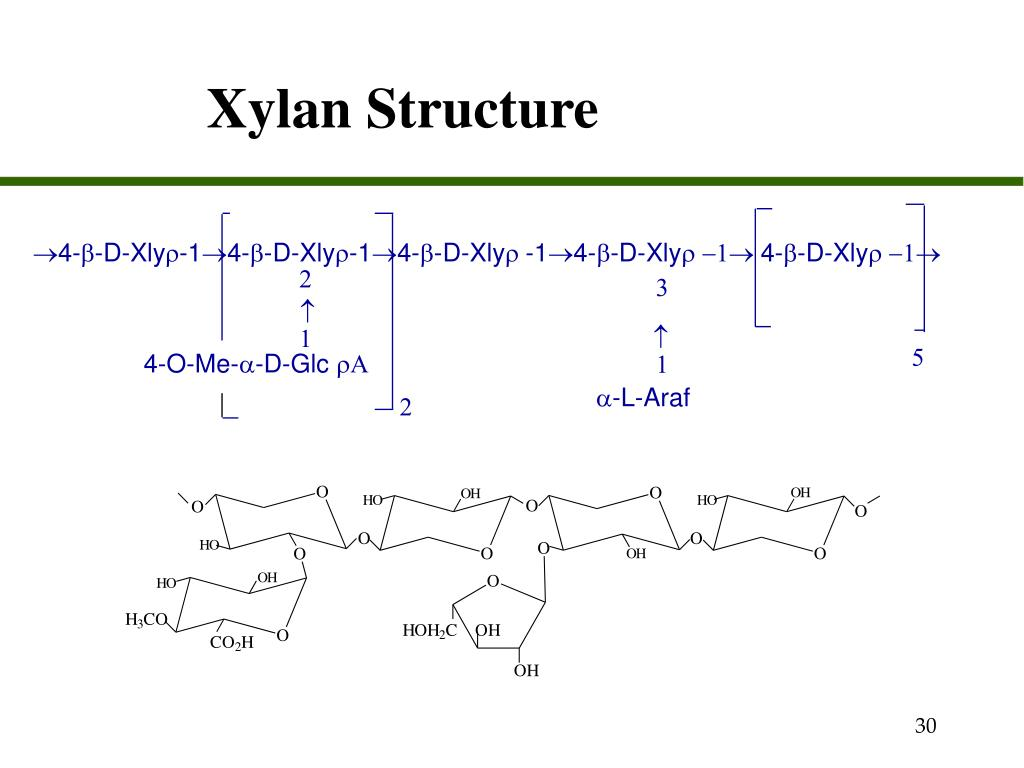 Xylan Structure