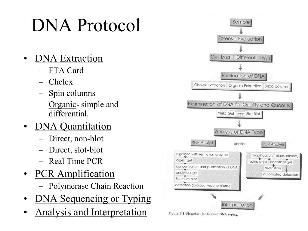 DNA Protocol