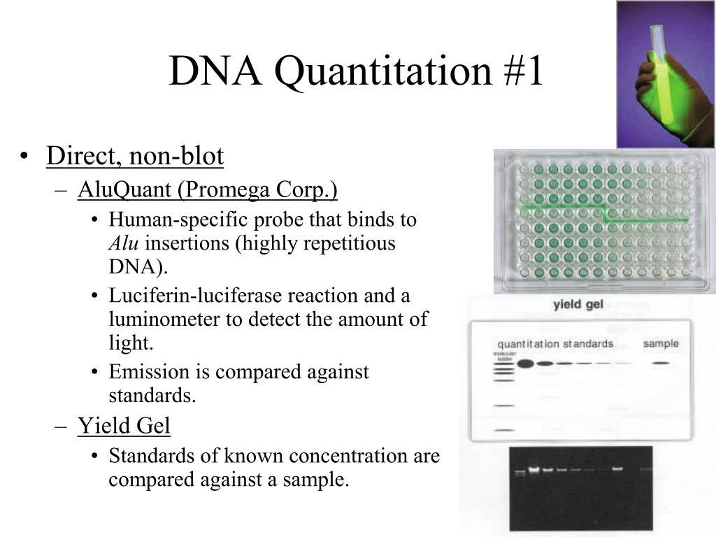 DNA Quantitation #1