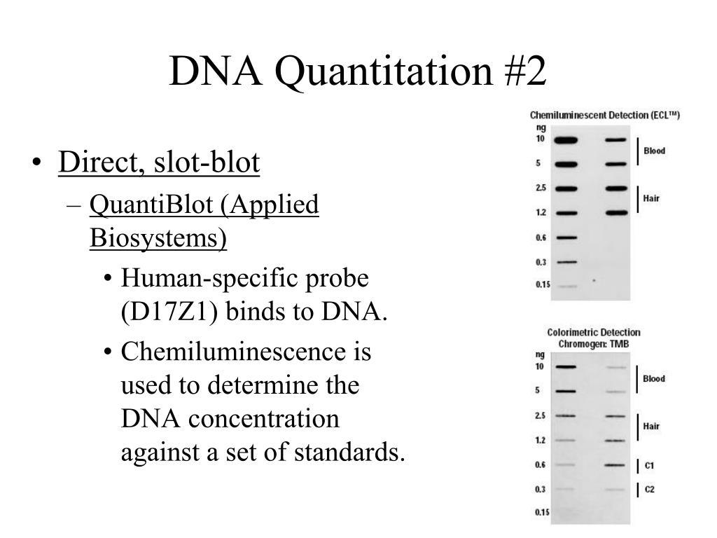 DNA Quantitation #2