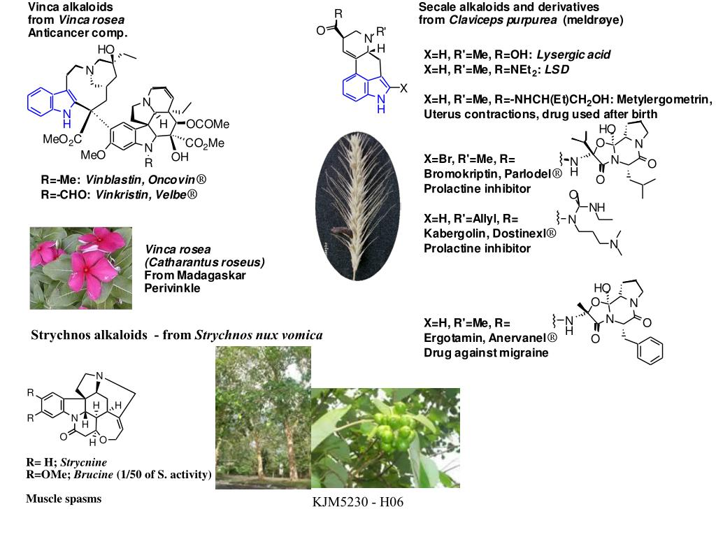 Strychnos alkaloids  - from
