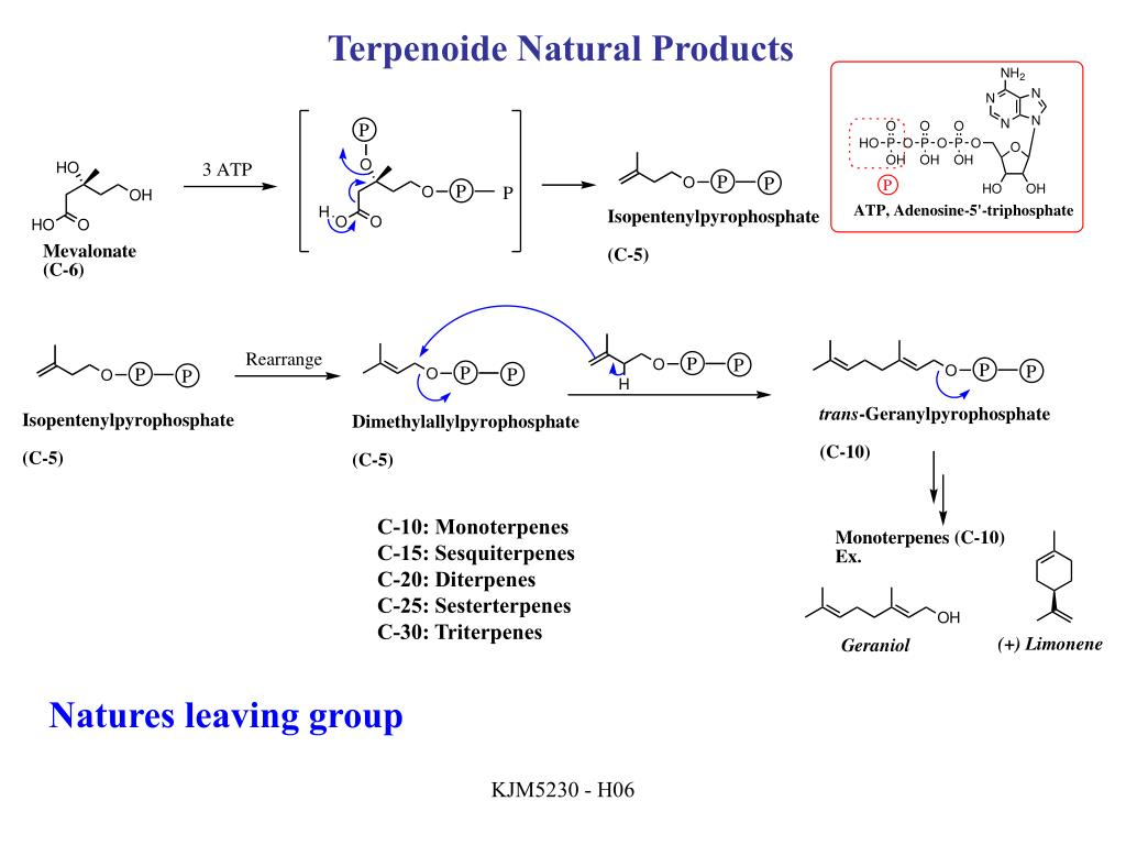 Terpenoide Natural Products