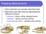 feeding mechanisms12