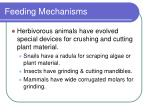 feeding mechanisms13