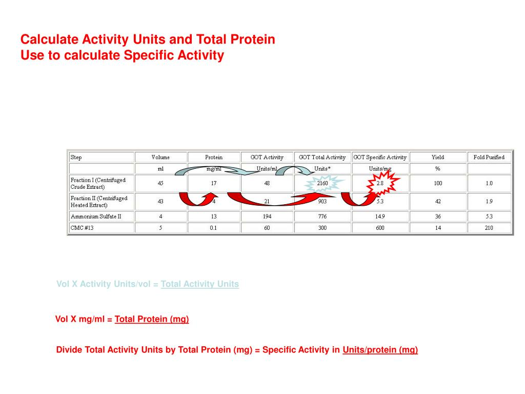 Calculate Activity Units and Total Protein