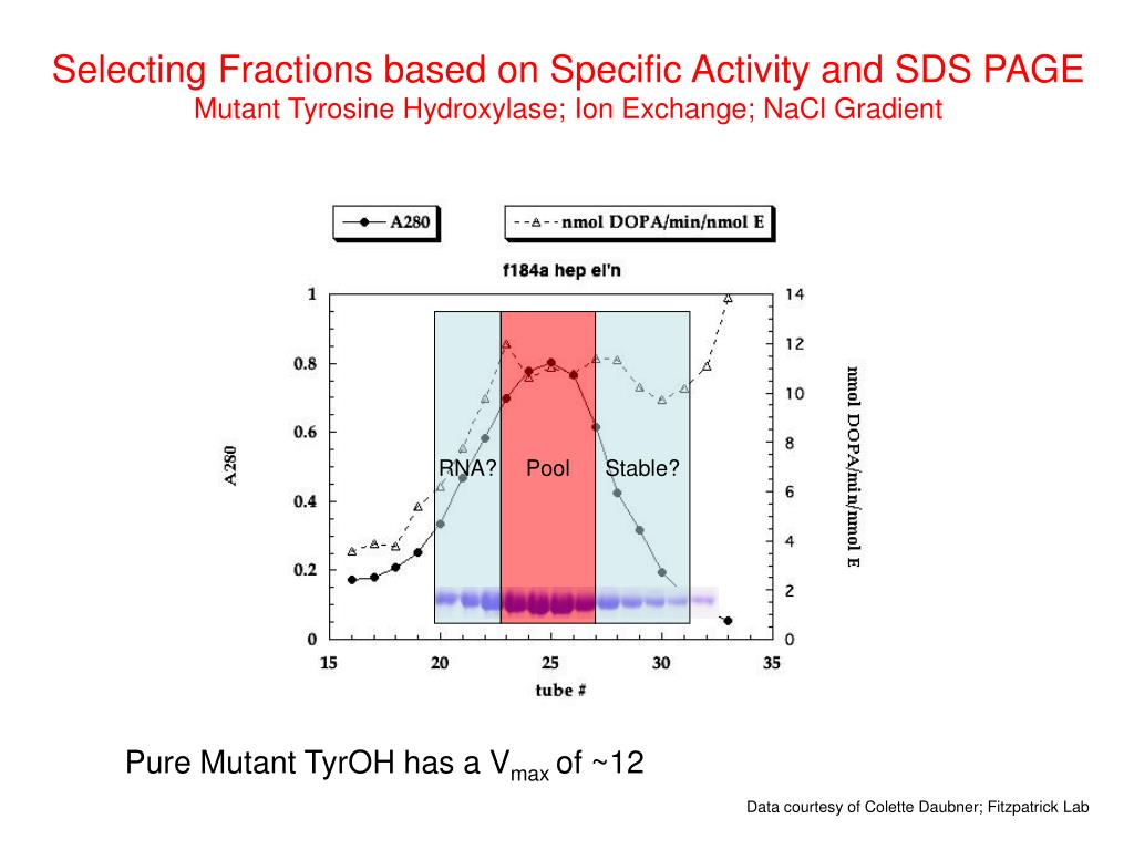 Selecting Fractions based on Specific Activity and SDS PAGE