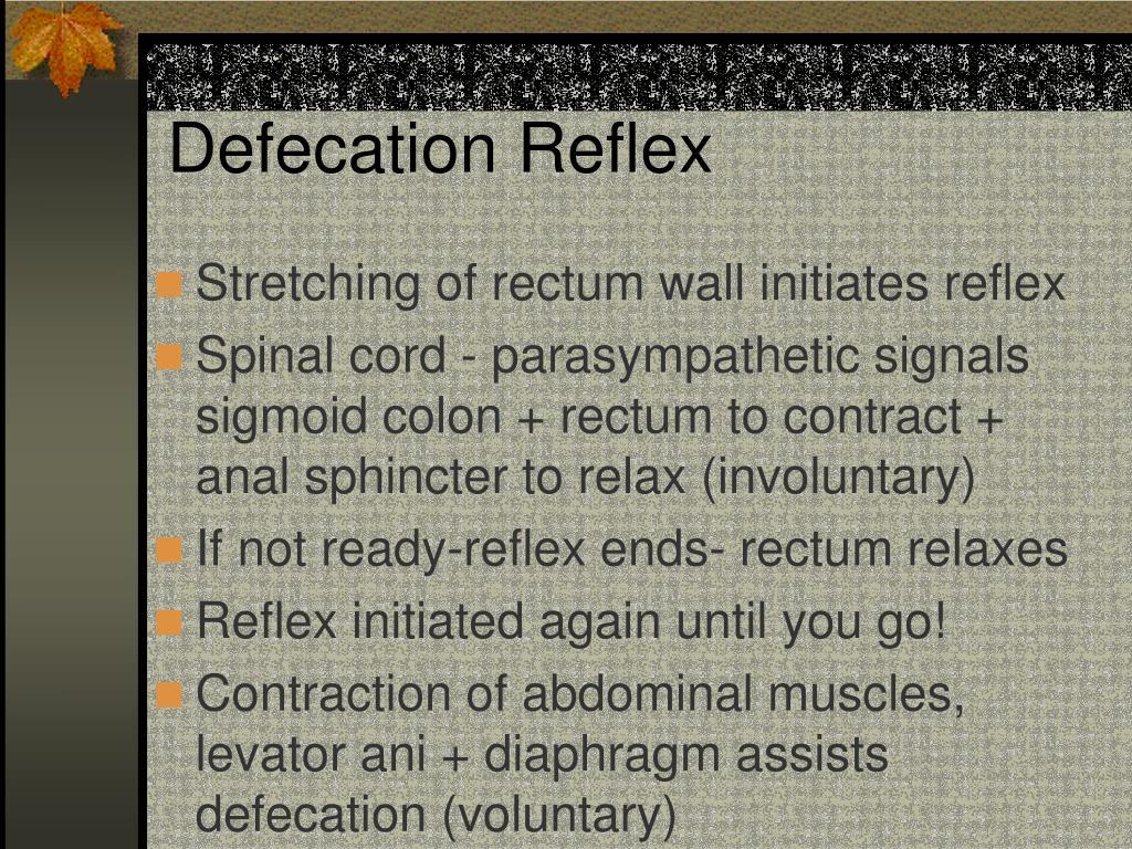 Defecation Reflex