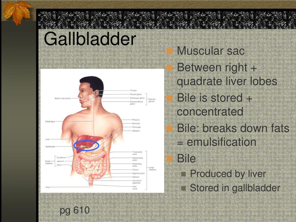 Gallbladder