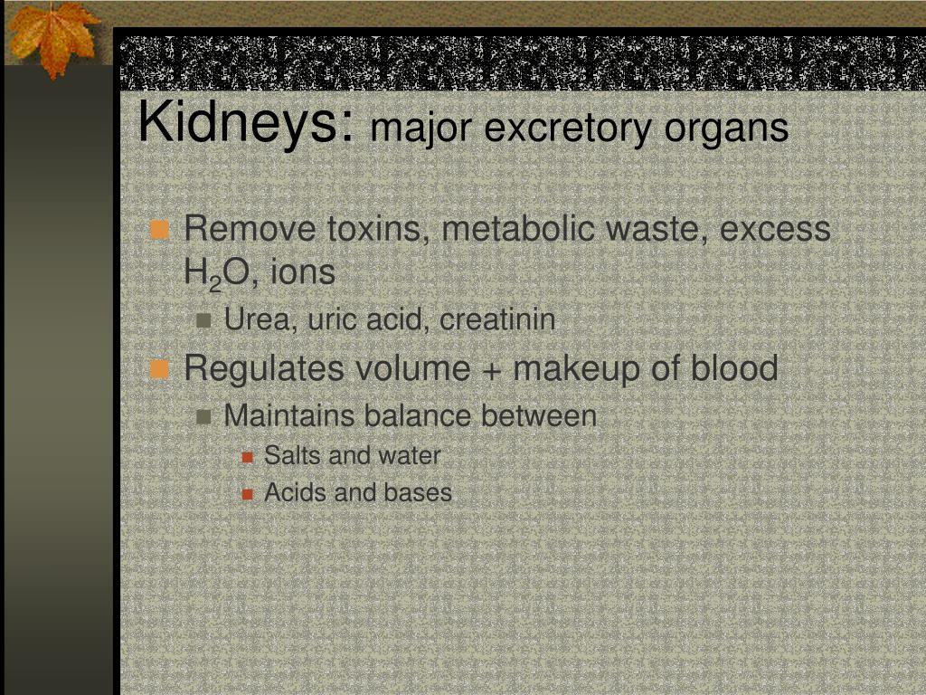 Kidneys: