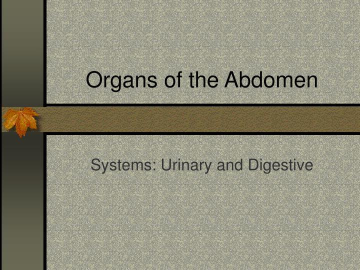 Organs of the abdomen
