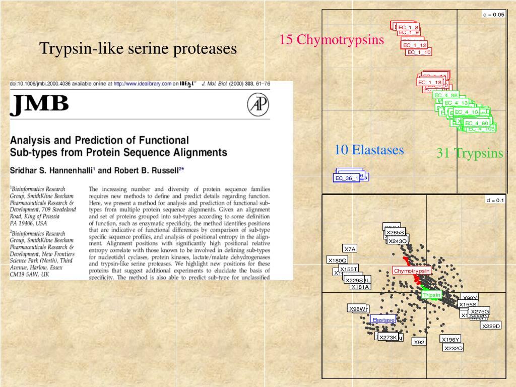 15 Chymotrypsins