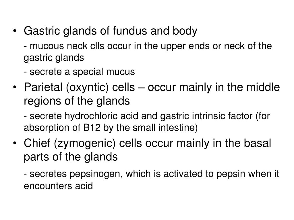 Gastric glands of fundus and body