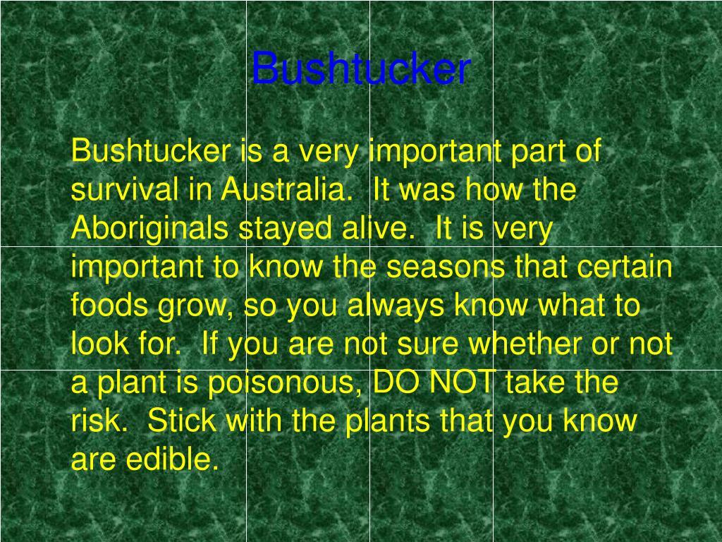 Bushtucker