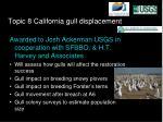 topic 8 california gull displacement