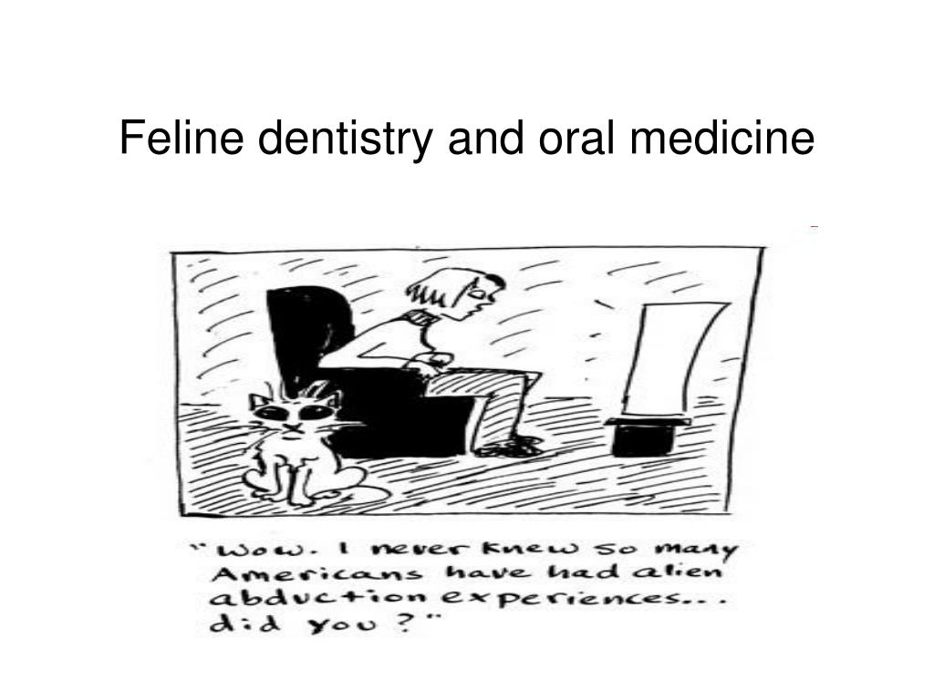 feline dentistry and oral medicine l.