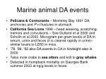 marine animal da events