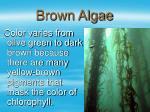 brown algae21