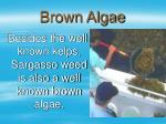 brown algae22
