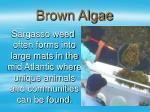 brown algae23