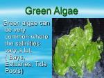 green algae15