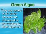 green algae16