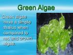 green algae17